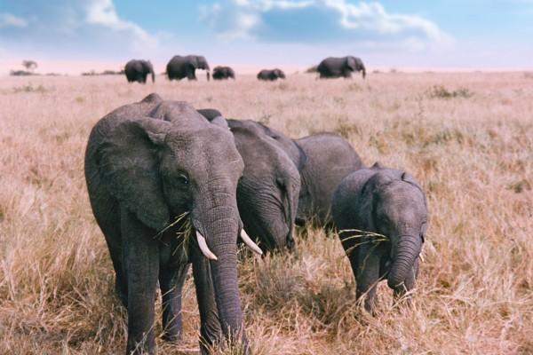 Elephant Family. Image courtesy: Stock.xchng