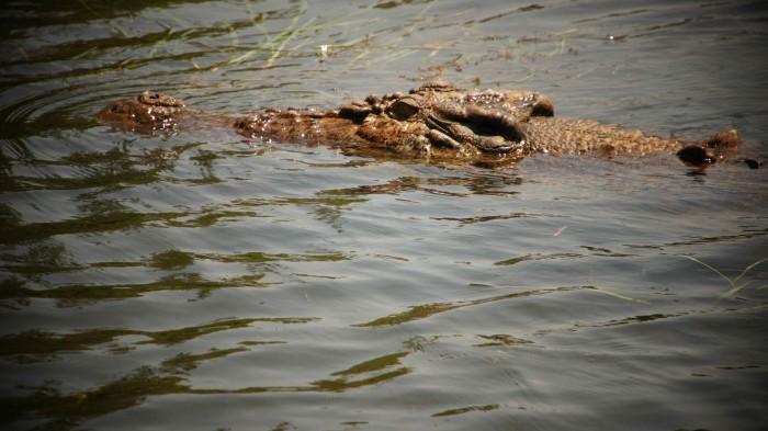 Image courtesy Greyson Ferguson  /Freerangestock.com