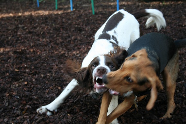 dog fight game