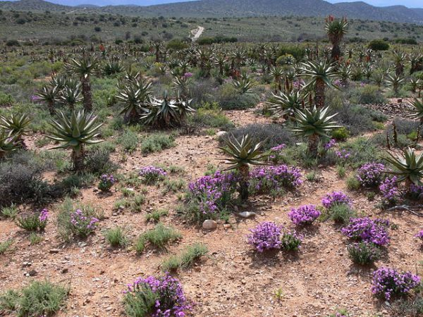 FILE PICTURE: The Karoo near Willowmore, Eastern Cape. Image courtesy Wikimedia Commons (Winfried Bruenken)
