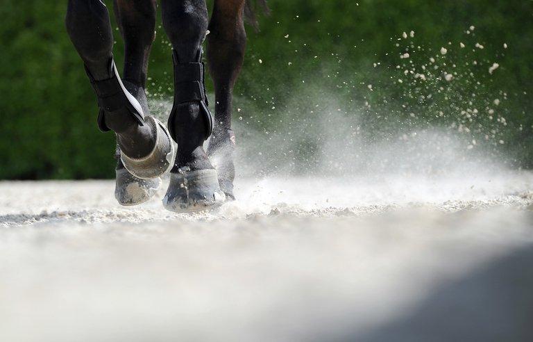 "Zubbadubbadoo has become one of racing's ""feel good"" stories"