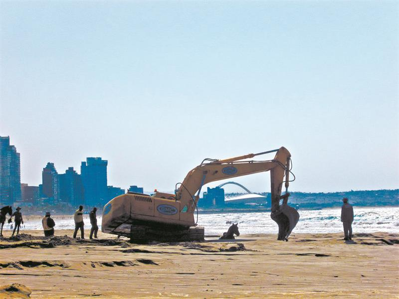 A municipal sand digger comes to the rescue of  Wild Boy. Pictures:  Pat Sunkel