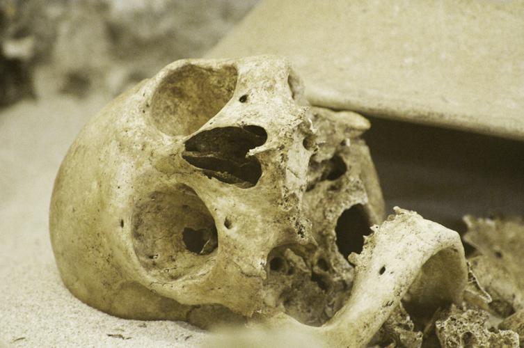 Human skull stock image courtesy stock.xchng
