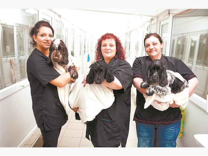 NO HABLA ESPANIEL. Shelly Saunders-Jones, Andri Xenos & Kelly Fontana run a dog-grooming business featured on 'Best In Town'.
