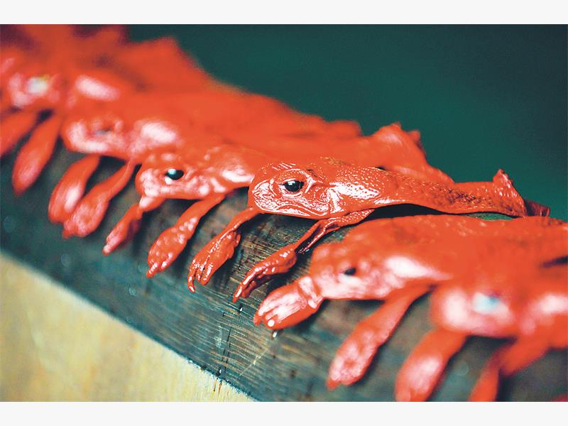 Lined up for luxury. Australian cane toads are displayed after being tinged in red at Alric tannery, owned by Jean-Charles Duchene.