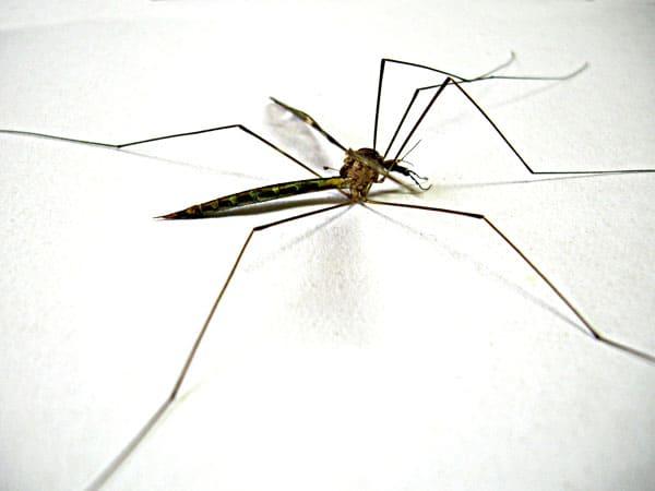 WHO declares Sri Lanka free of malaria