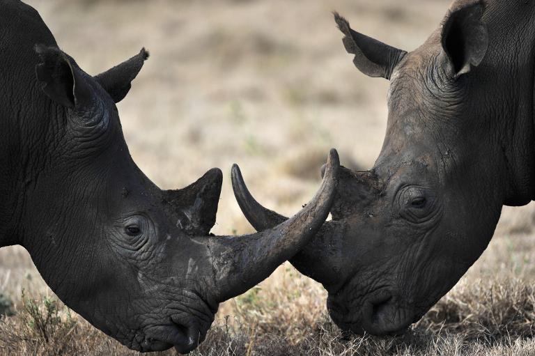 FILE PICTURE: Rhino. Picture: AFP
