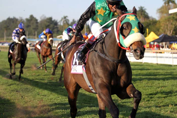 BACK IN ACTION. Normanz, pictured winning the Grade 1 Golden Horse Sprint at Scottsville, returns to racing after a layoff in Race 1 at Greyville on Sunday.