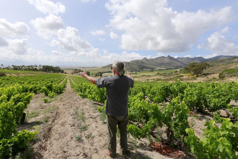 AFP/File / Jennifer Bruce<br />Winemaker Adi Baadenhorst gestures toward his wineyard on November 28, 2014 at Kalmoesfontein Farm, in the Swartland region of South Africa