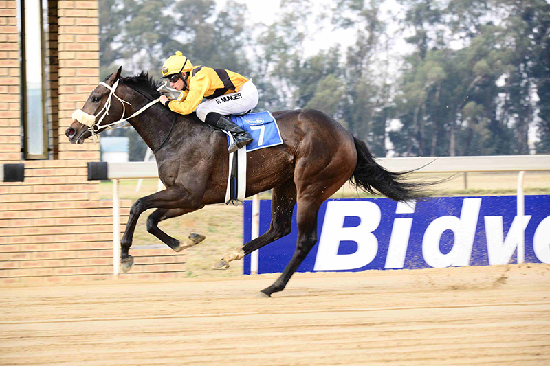SAND SPECIALIST: Be Mine Tonight has an excellent record on the Vaal sand and is expected to win Race 3 over 1450m at the course today.