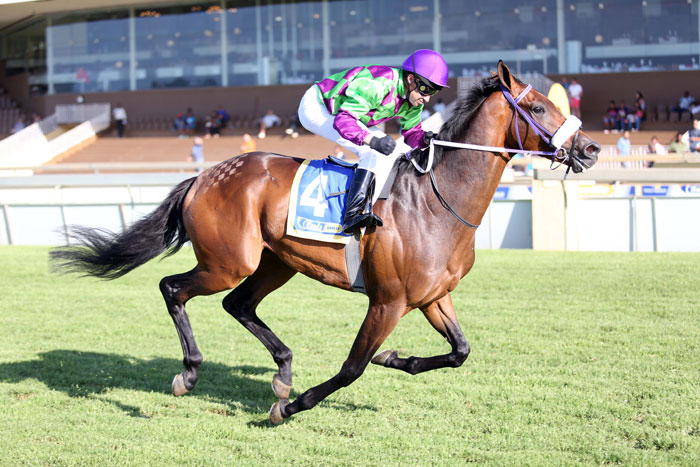 Run Rhino Run has his first race for trainer Paul Lafferty and  is expected to rise to the occasion in Race 7 at Scottsville today.