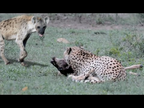 Teen recovering after hyena attack at the Kruger class=