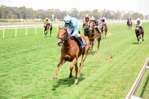 Fairview Polytrack. Picture: Supplied
