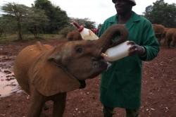 Wildlife sanctuary saves baby giants