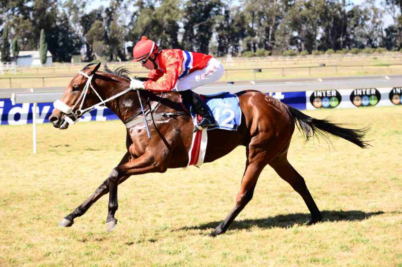 COMEBACK. Trainer Sean Tarry will be looking for Prospect Strike to finish the race off well when he runs in Race 5 at the Vaal today.