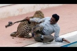 VIDEO: Leopard injures five at Indian school