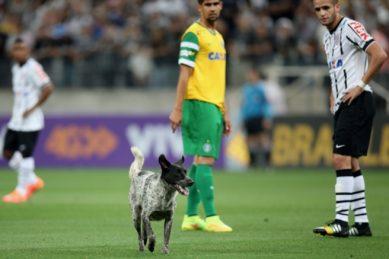 Watch: Cheerful dog runs onto soccer pitch