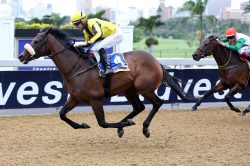 Cape Speed has Gold Cup look