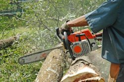 Limpopo man killed in chainsaw accident