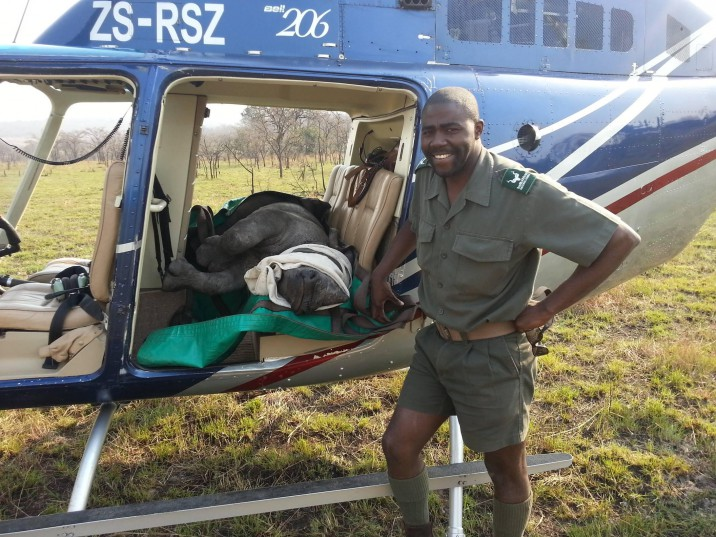 Rodney Landela was one of the bright stars in the programmes of the KNP to reintroduce rhinos to other parks. He was also working on the rhino orphans programme where Kruger orphans were resettled with rhino cows who 'adopted' them. Photo: Lowvelder