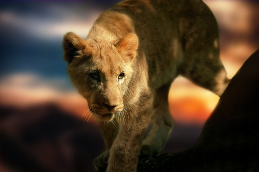 JHB airport to remove cub-petting images from its international arrivals corridor