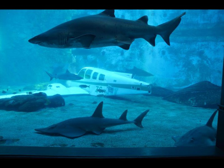 From the air to water, the aircraft has new life at the bottom of the aquarium at uShaka Marine World. Picture: North Coast Courier