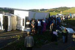 Chicken chaos as truck overturns