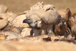 One million species risk extinction due to humans – draft UN report