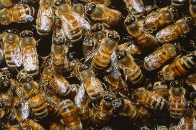 Angry bees delay Air India flight