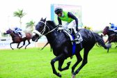 Watch a video of your Sansui Summer Cup horse
