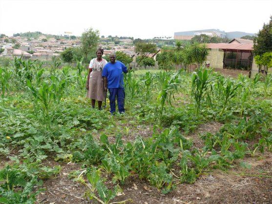 Amon Maluleke of the Bambanani Food and Herb Cooperative and community volunteer Lekau Nkoko. Picture: Bedfordview Edenvale News.