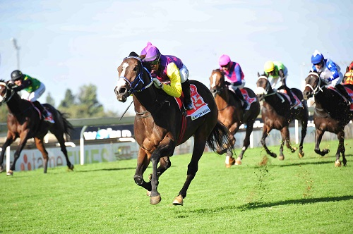 CLASS ACT: Carry On Alice has been a top performer and is the runner they all have to beat in the Grade 2 Sceptre Stakes over 1200m at Kenilworth today.