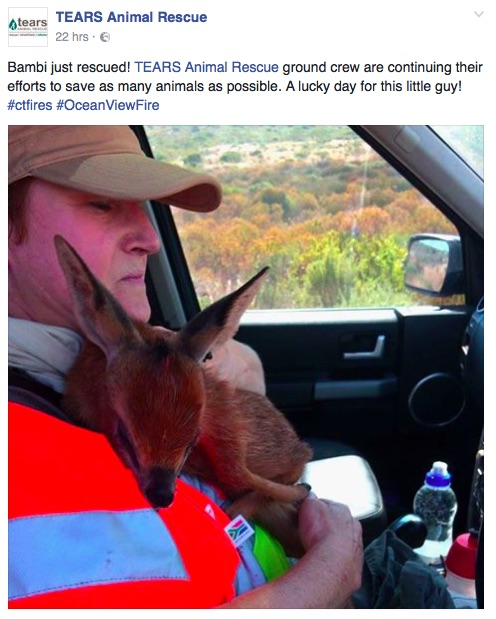 A screenshot from the Tears Animal Rescue Facebook page. Picture: Facebook