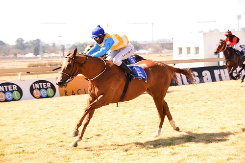 IMPROVING: Super Stratum looks to have ability and is expected to keep his unbeaten record intact when he runs in Race 7 at the Vaal today.