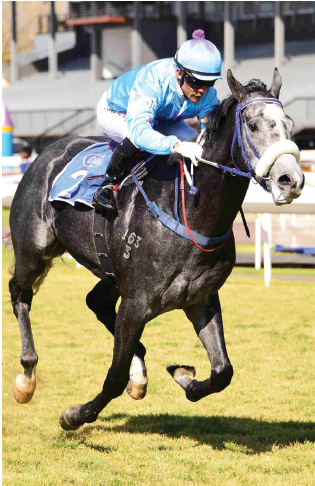 WELL HANDICAPPED. Heavenly Blue is the top rated runner in the Betting World Gauteng Guineas.