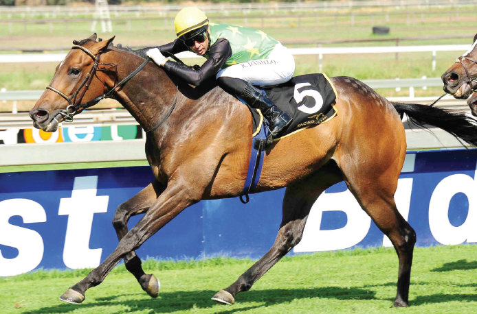 BEST FORM. Master Switch is lightly raced but very talented and looks the answer to the Listed Drum Star Handicap over 1800m on the Turffontein Inside track tomorrow.