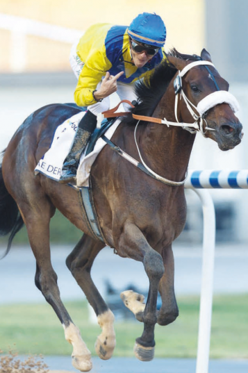 CUP HOPE. Mubtaahij will carry the De Kock stable's hopes of a victory in the Dubai World Cup - but faces a formidable field, including Arrogate.