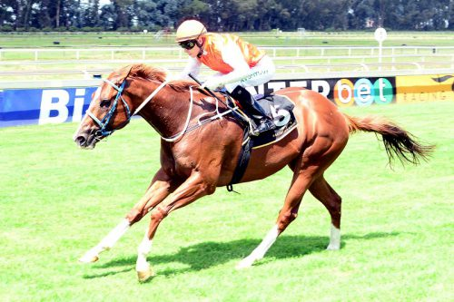 Clever Guy in Race 9 is one of three possible Pick 6 bankers on today's Turffontein card.