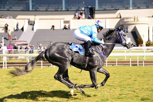 TUNED UP. Heavenly Blue needed his Guineas run and will strip a lot fitter for today's R2-million SA Classic (Grade 1) over 1800m at Turffontein.