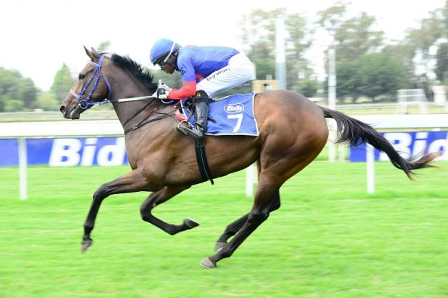 Safe Harbour has the best form in the R500,000 Wilgerbosdrift Gauteng Fillies Guineas over 1600m at Turffontein today but she is drawn very wide.