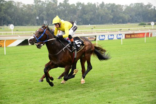 Piere Strydom has made Tilbury Fort, who runs in Race 6 at Turffontein today, a banker in all bets.