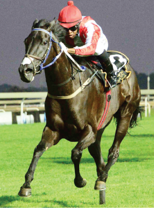 ANOTHER CHANCE. She's Foxy's last race was a disappointment, but she deserves another chance in Race 6 at the Vaal tomorrow.