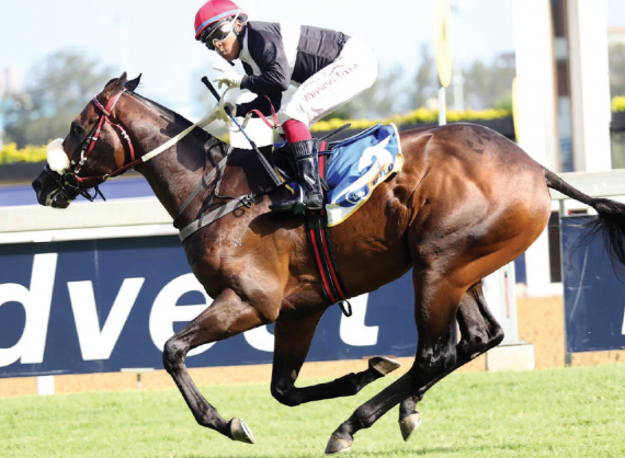 RLY PICK. Ten Gun Salute is David Mollett's early hope at a big price for this year's Vodacom Durban July.