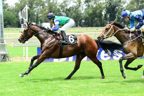 STRONG CREDENTIALS. Crazy Vision has raced against some decent opposition and off a light weight could be the runner to beat in Race 7 over 1450m at Turffontein today.