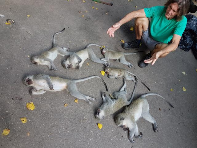 Steve Smit with seven of the eight dead monkeys found in Escombe. PHOTO: Submitted