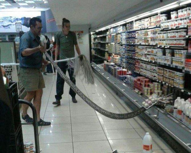 A local snake handler removed a 3,5 m African rock python from Komatipoort SUPERSPAR's fridge.