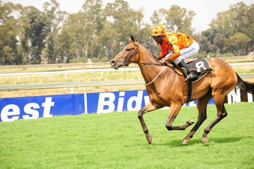 BANKER. Al Danza is the best handicapped runner in Race 7 at Turffontein today and should be a banker in all bets.