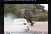 UPDATE: Employee pleads guilty to harassing elephant