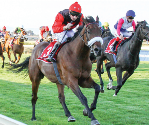 HOPEFUL. African Night, winner of the Winter Guineas, has been aimed at the second leg of the Winter Series, the Grade 3 Winter Classic over 1800m at Kenilworth on Sunday 21 May.