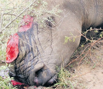 A total of 18 horns were removed from nine rhino poached in the past week